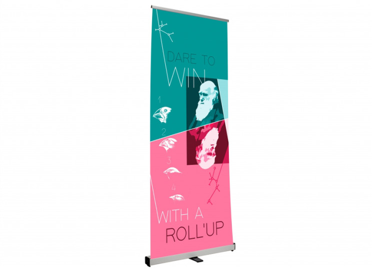 PLV Rollup Design