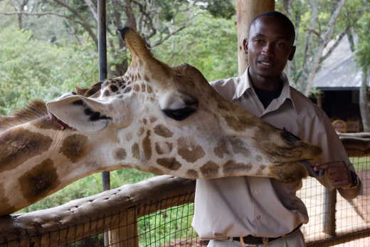 Giraffencentrum in Nairobi in Kenia