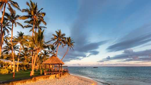 Discover beautiful palm trees and a hut on the Viti Levu Coral Coast Beach.