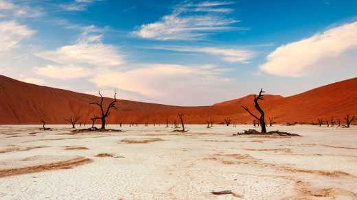 Dead tree in Sossusvlei Namibia