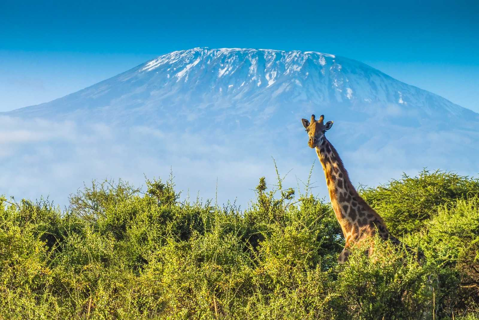 Rondreis Tanzania – Individuele Rondreizen Op Maat | Tourlane