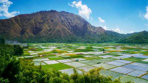 Farmland at Mount Rinjani on Lombok, Indonesia