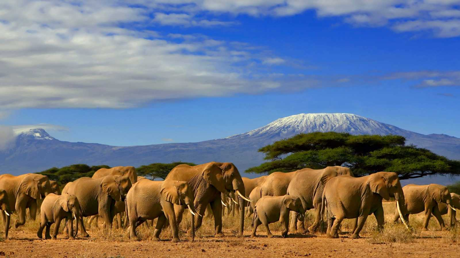 A herd of elephants in Kenya