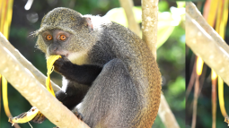 See exotic animals, like a monkey pictured here, on a tailor-made vacation