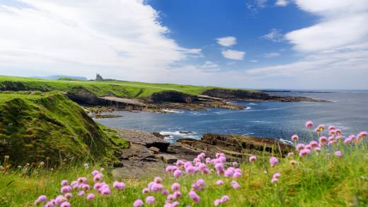 Europe, Ireland, Sligo coast with grassy hills, purple flowers, and blue skies.