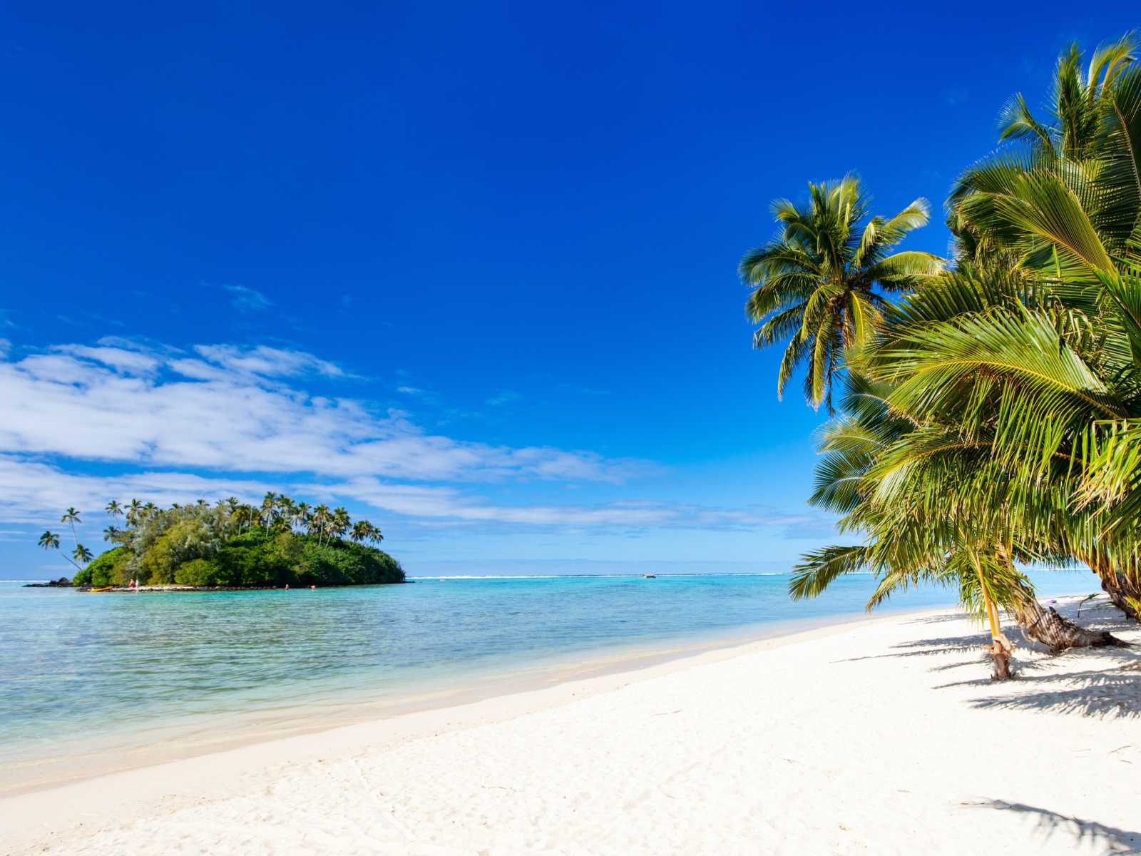 Go on a Cook Islands vacation to see palm trees on white sands of Rarotonga Muri Beach Lagune.