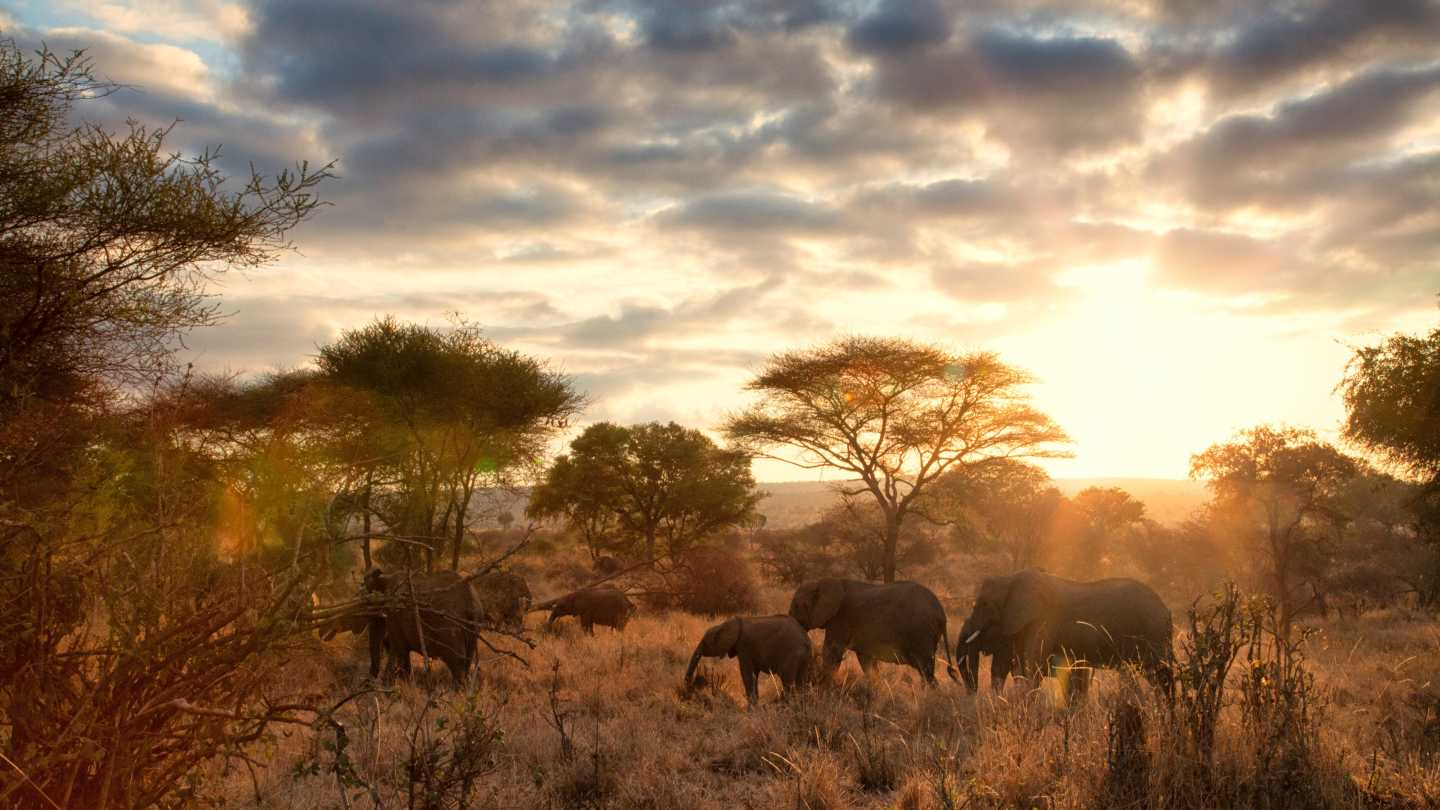 Africa, Tanzania, elephants roam in Tarangire National Park with the evening sun shining in the background.
