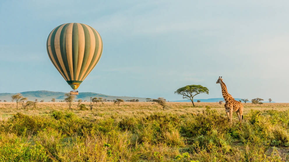 See giraffes on a hot air balloon ride, pictured here, on a tour of South Africa