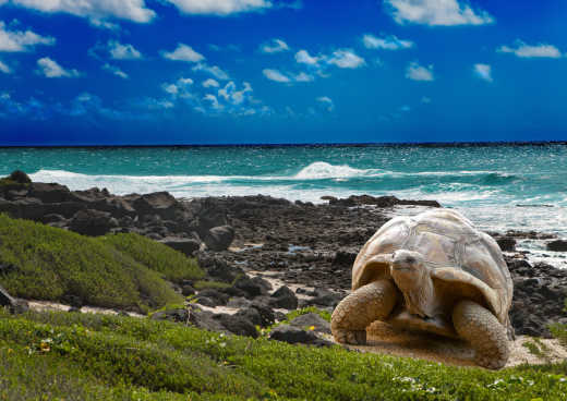 Turtle on the Galapagos Islands