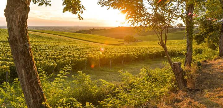 Coucher de soleil sur le vignoble bordelais en France.