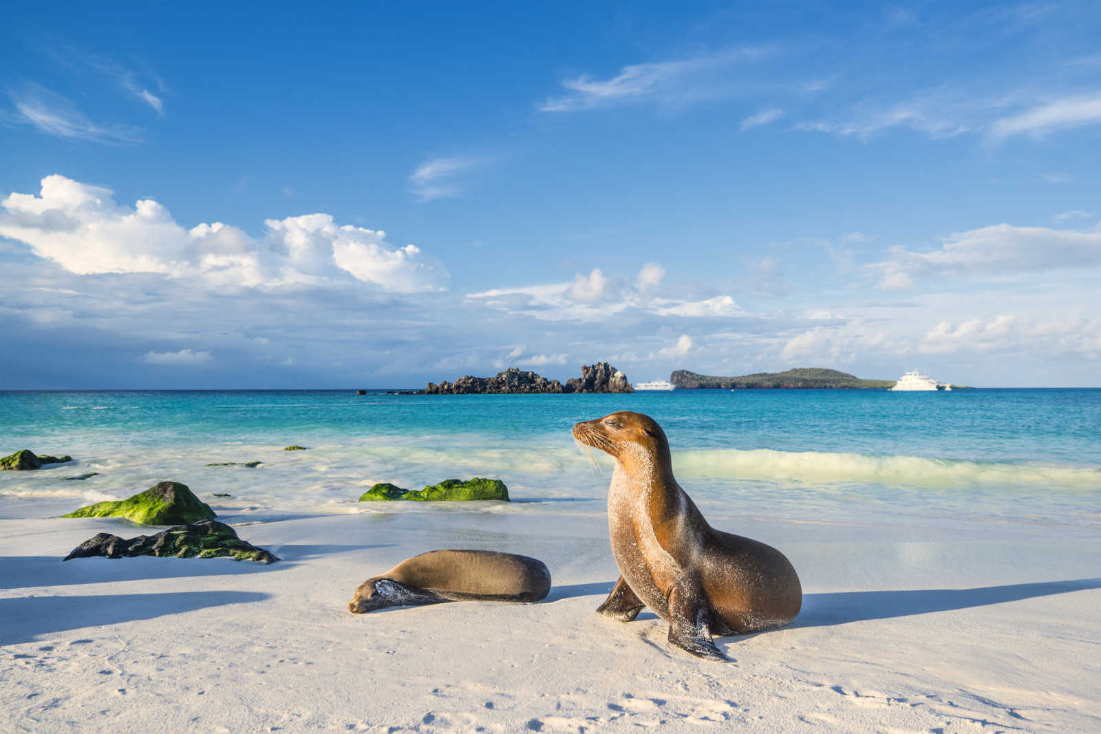 See beautiful seals on white beaches, pictured here, on a Galapagos Islands vacation