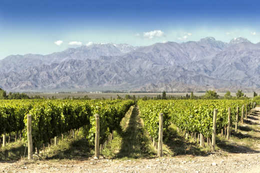 Discover the beautiful wine country of Argentina on a Mendoza wine tour