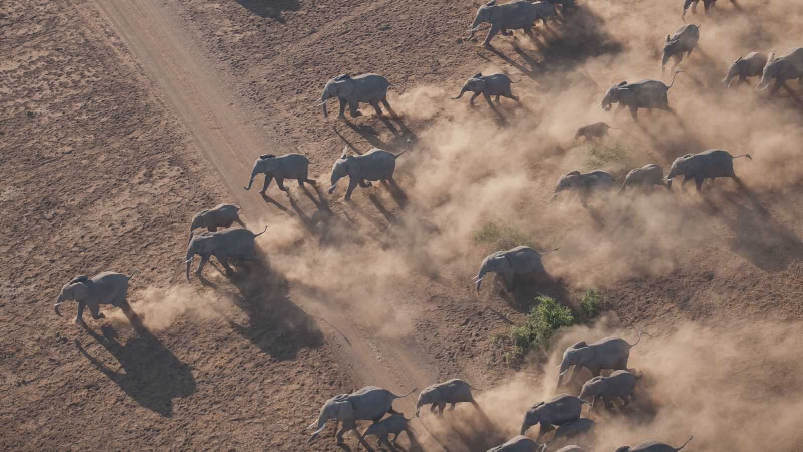 Herd of african elephants in the Masai Mara National Reserve in Kenya