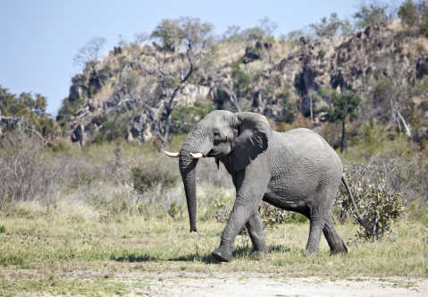 Savuti in Botswana im Chobe Nationalpark