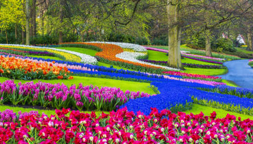 The beautiful Keukenhof Park is blooming in bright colors. Discover the park and the flowers during your trip to the Netherlands at the time of the Flower Festival.