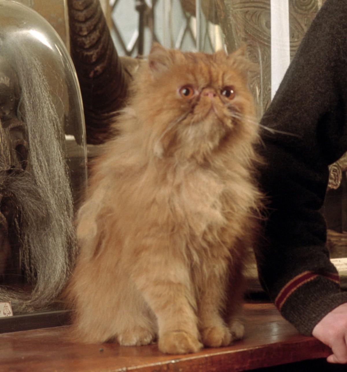 Harry Potter's Enchanting Pets | PEOPLE.com  |Harry Potter Hermione And Crookshanks
