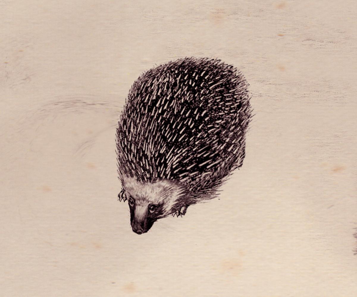 Image result for knarl fantastic beasts