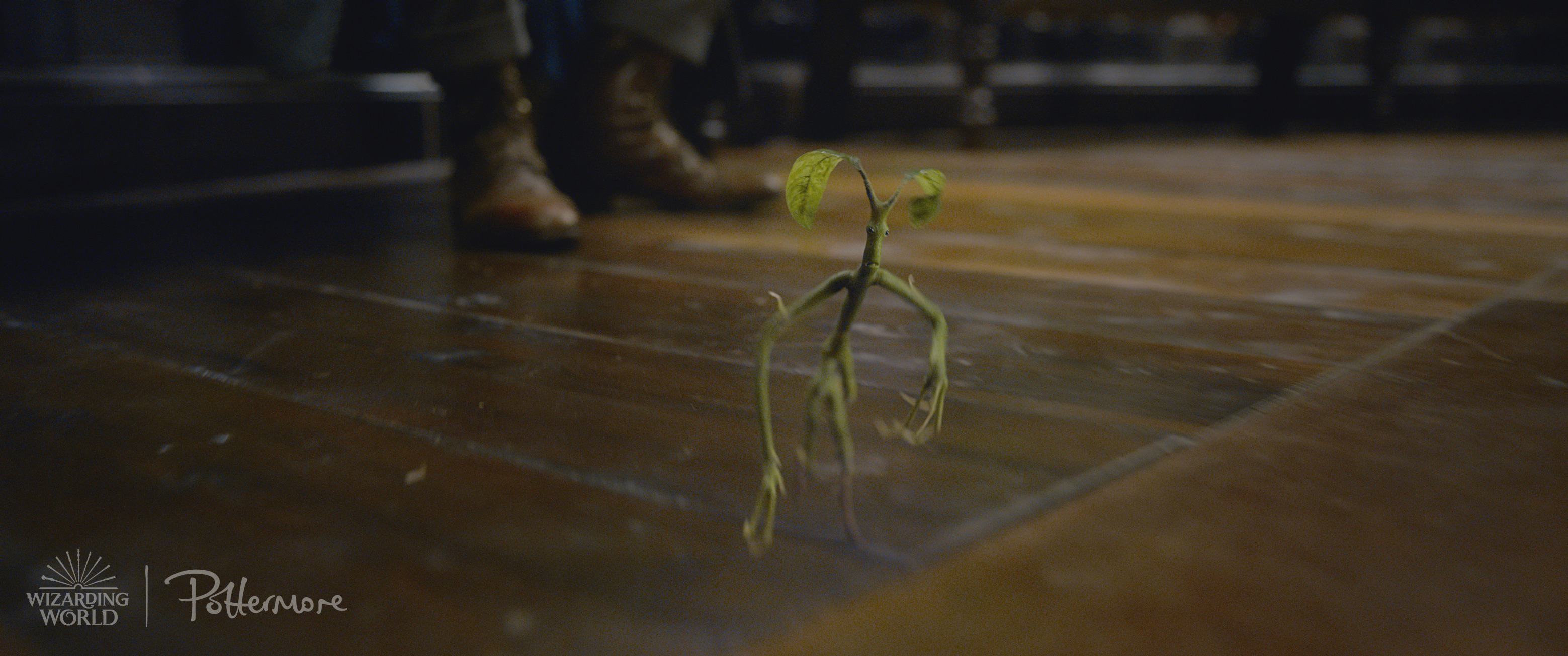 Pickett the Bowtruckle in the trailer for Fantastic Beasts: Crimes of Grindelwald