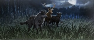 Prongs, Padfoot, Moony and Wormtail in their transfigured animal forms.