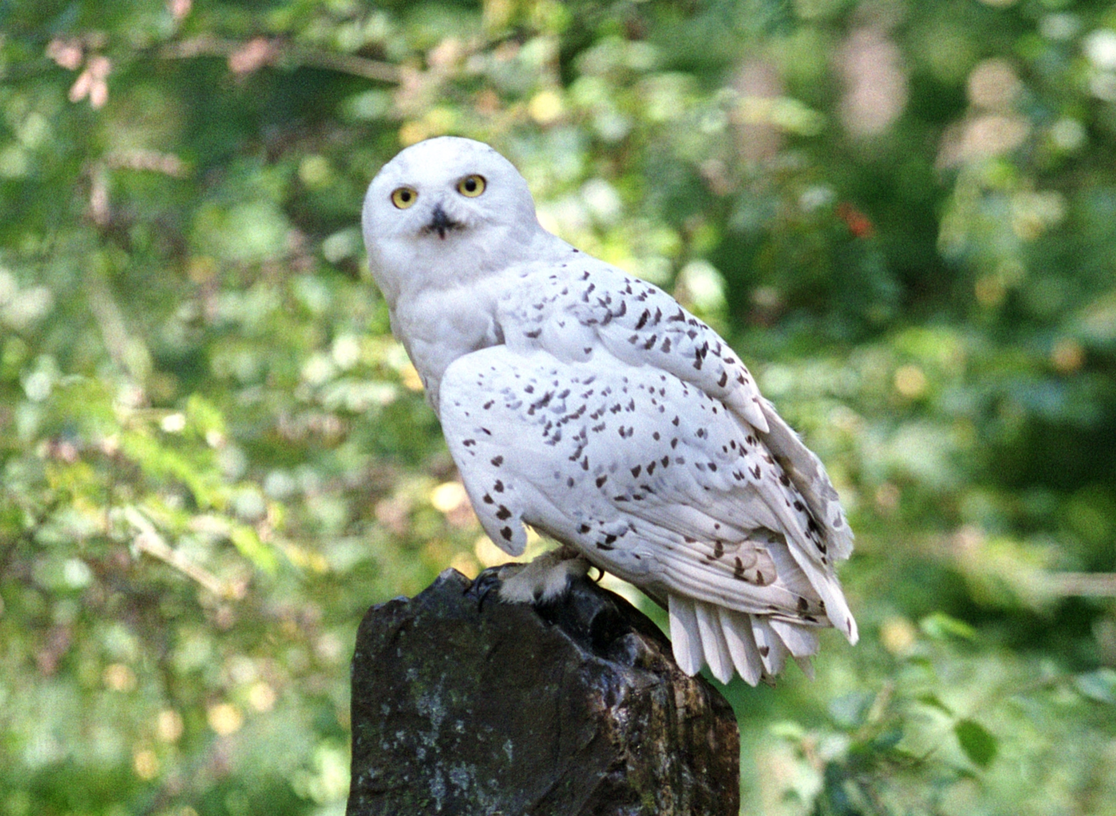 Hedwig in the forest