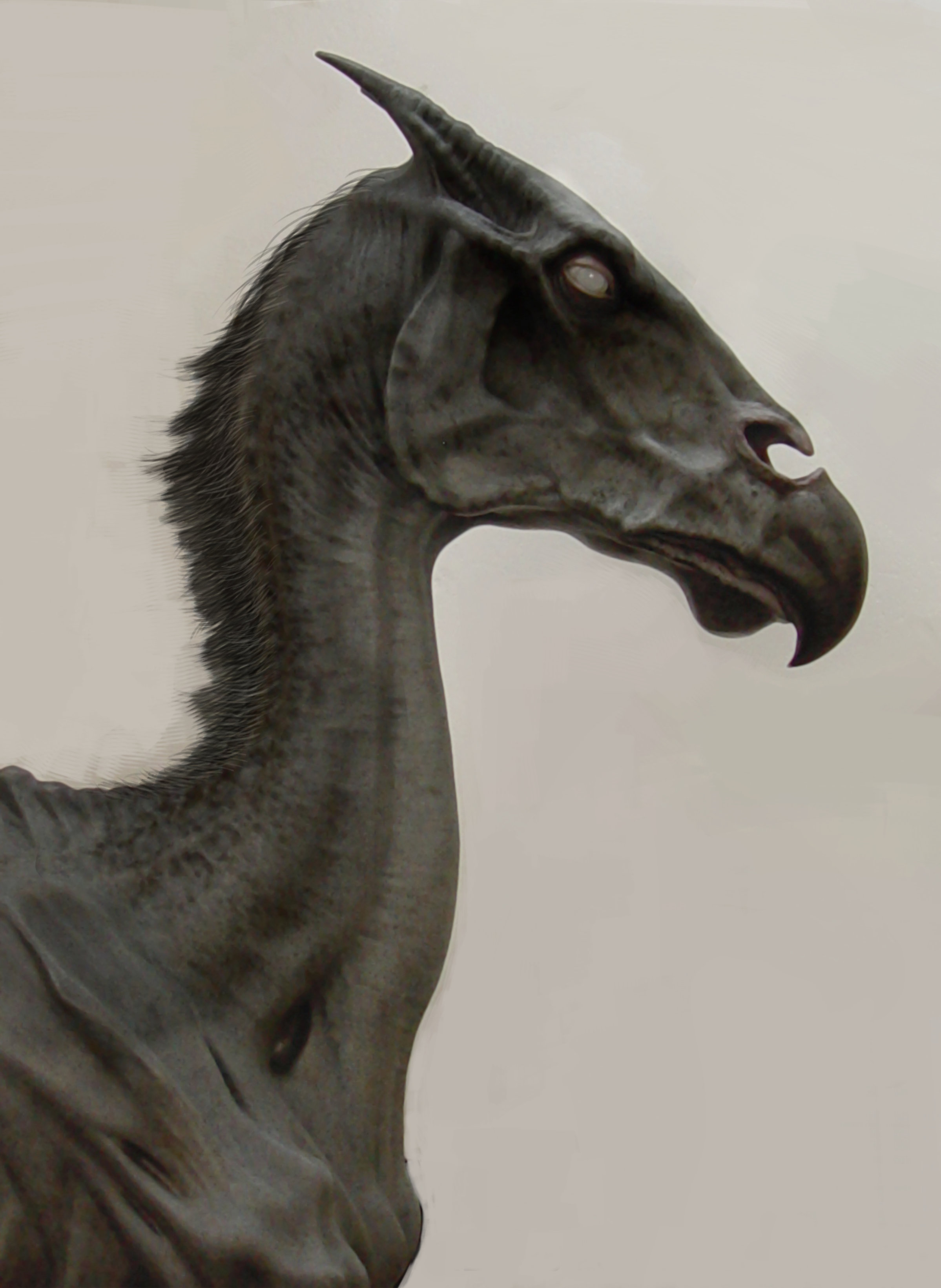 Thestra, skeletal looking black horse, facing right.