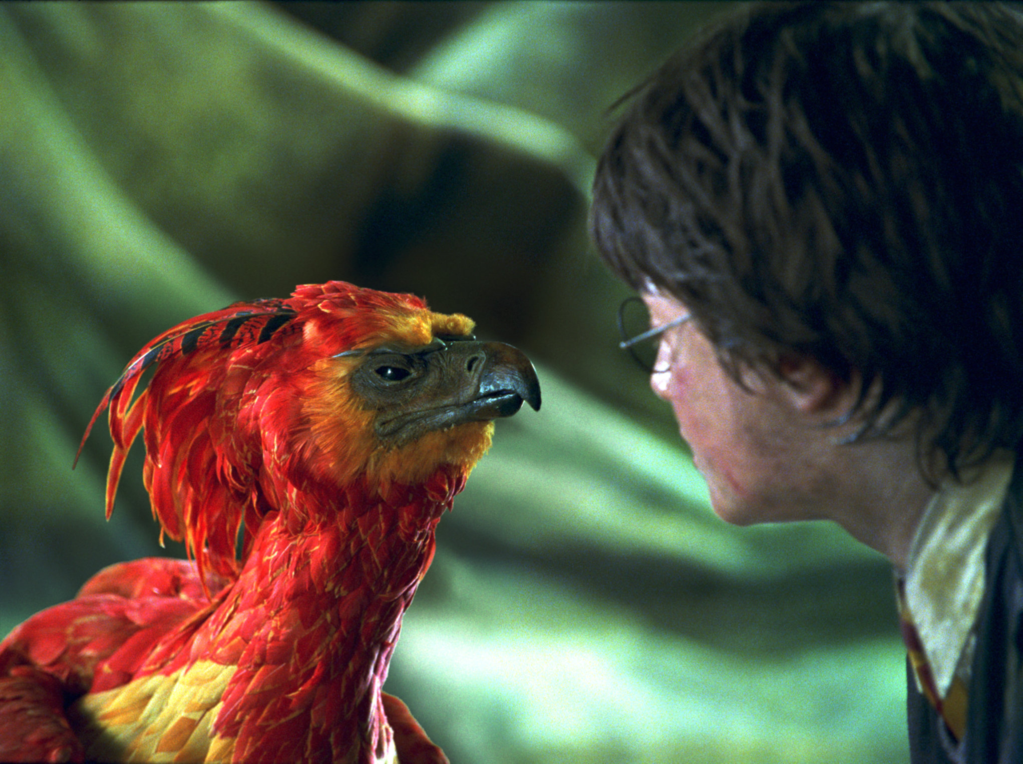 Close-up of Harry and Fawkes from Harry Potter and the Chamber of Secrets