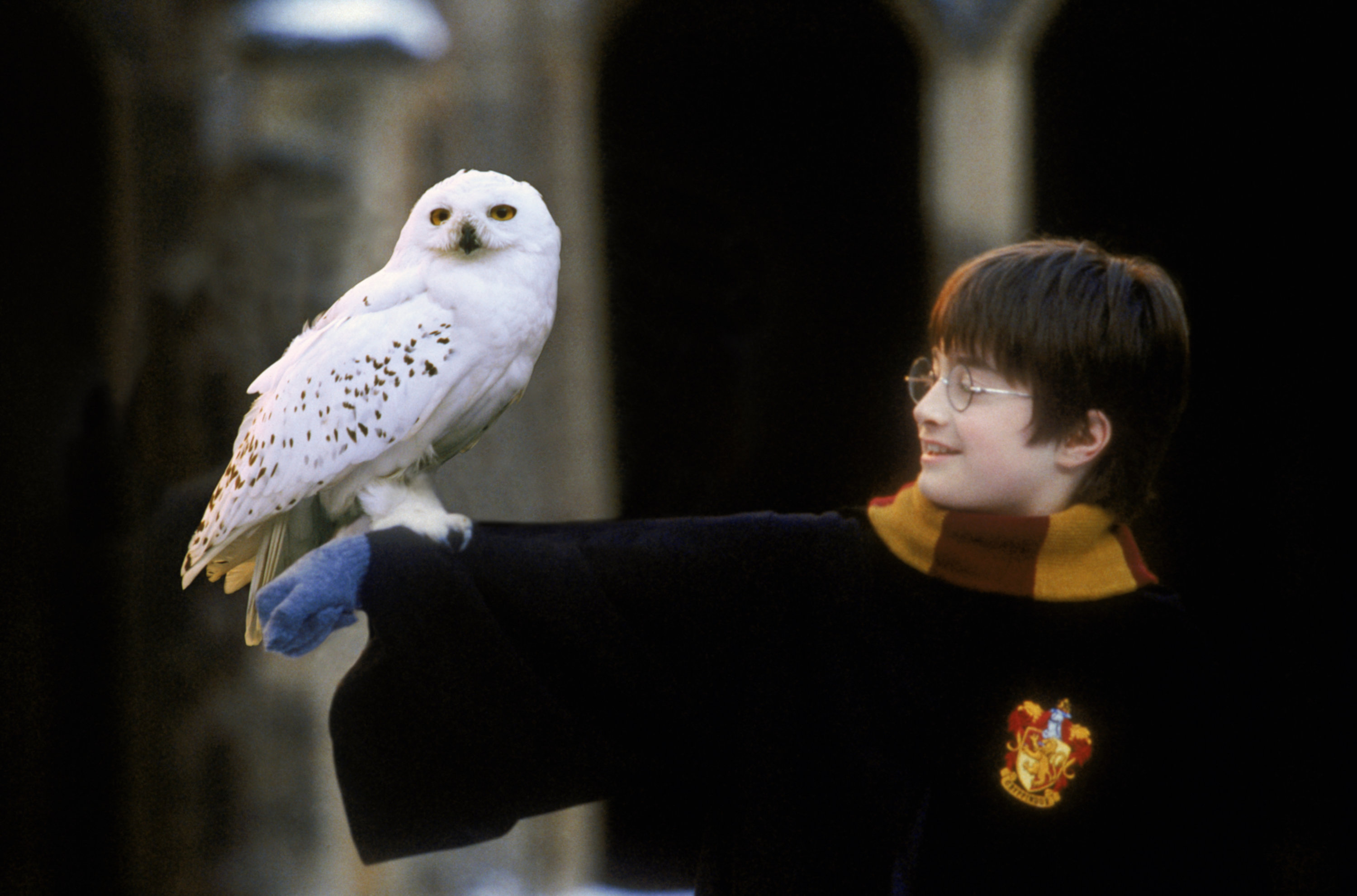 Harry holds Hedwig on his arm in Hogwarts courtyard