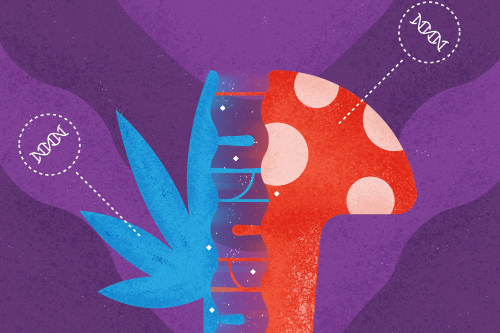 Psillow | Mushrooms and Cannabis: A Primer on Mixing