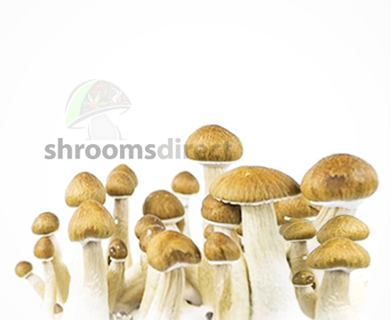 Psillow | Shrooms Direct Penis Envy