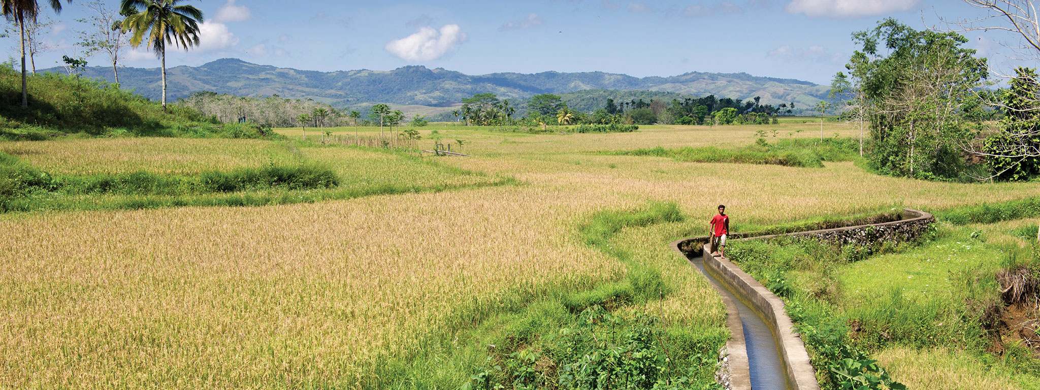 indonesia-sumba-island-rice-field