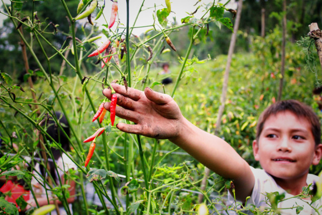 How a Clever Chilli Farm Idea is Changing a Community