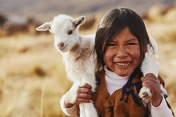 5261 GOC-2018 Website Products Store-Image 01 600x400px Goat