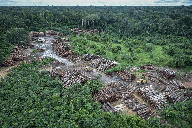 7.387 troncos de tala ilegal extraídos del Territorio Indígena de Pirititi, en la región sur de Roraima, Brasil. Felipe Werneck / Ascom / Ibama, 2018.
