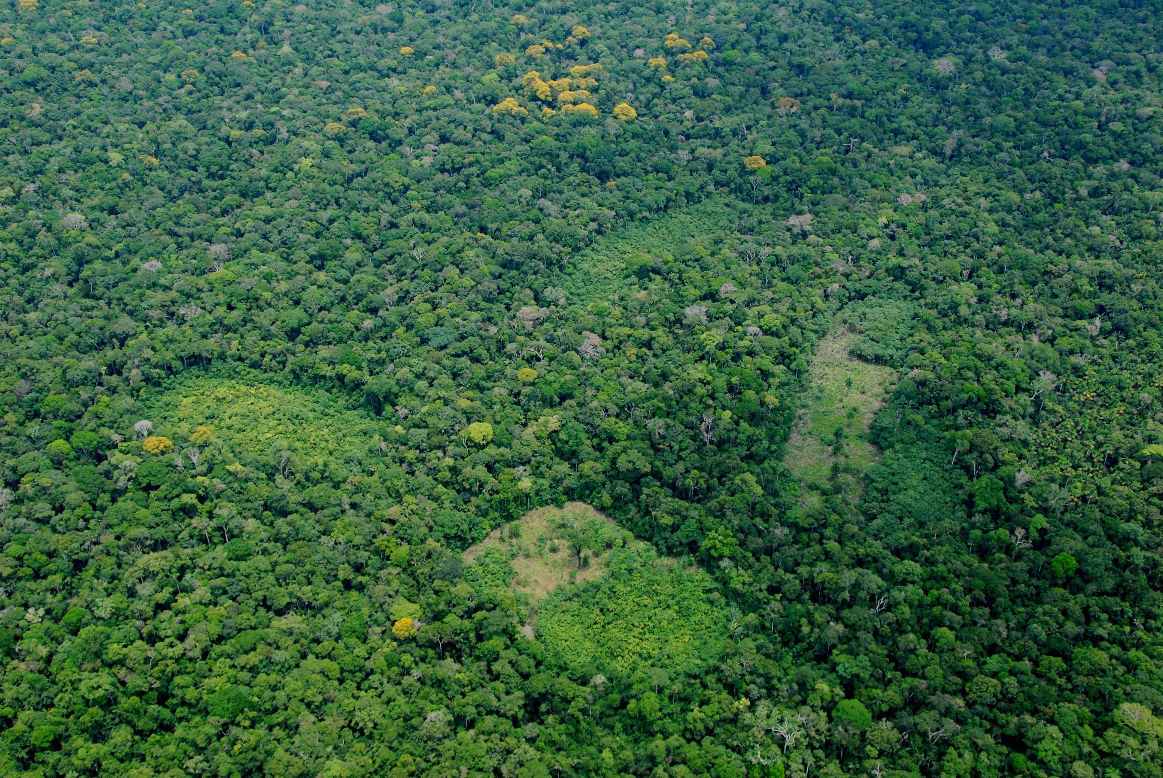 Illegal cultivation of coca leaves in the Cotuhe River basin, Loreto Region, Perú. Álvaro Del Campo / The Field Museum, 2010.