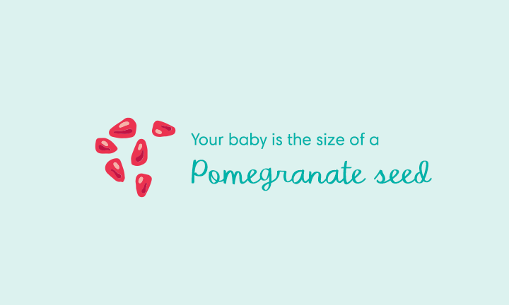 Your baby is the size of a pomegranate seed