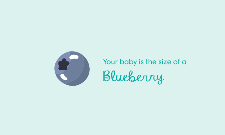 Your baby is the size of a blueberry