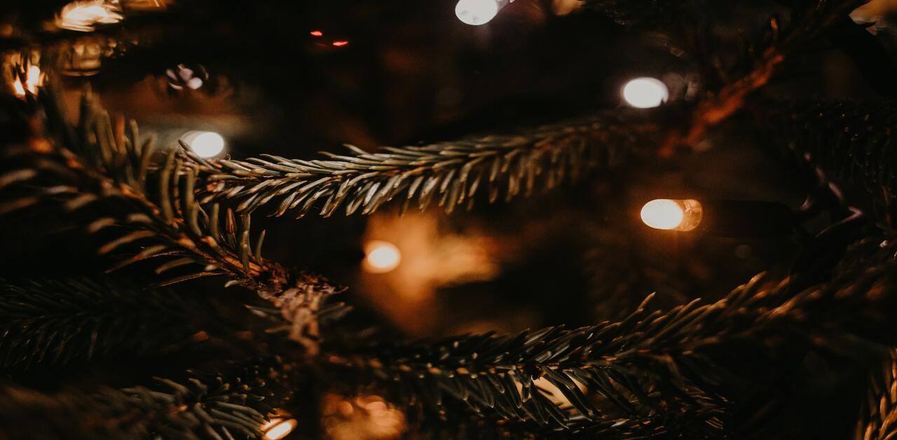 ¿Cómo replantar tu árbol de navidad después de las fiestas? - La Haus