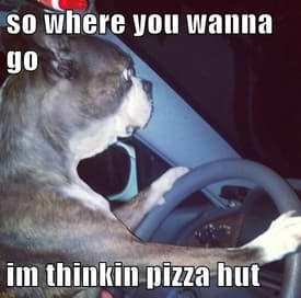 pizza-hut-dog