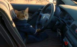 cat-chauffeur