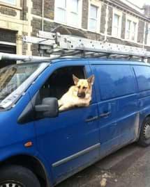 van-dog