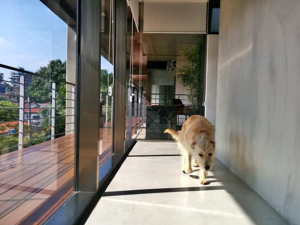 SaoPaulo-office-dog