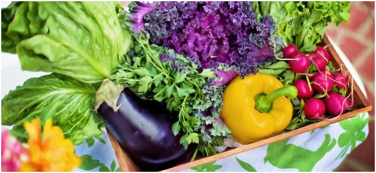 Jak uprawiać warzywa na balkonie – zasady oraz wybór roślinności