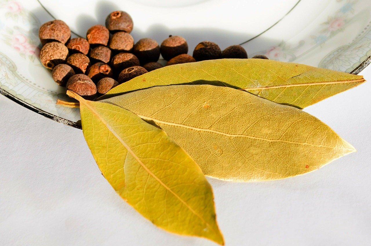 Jak uprawiać i pielęgnować drzewko laurowe?