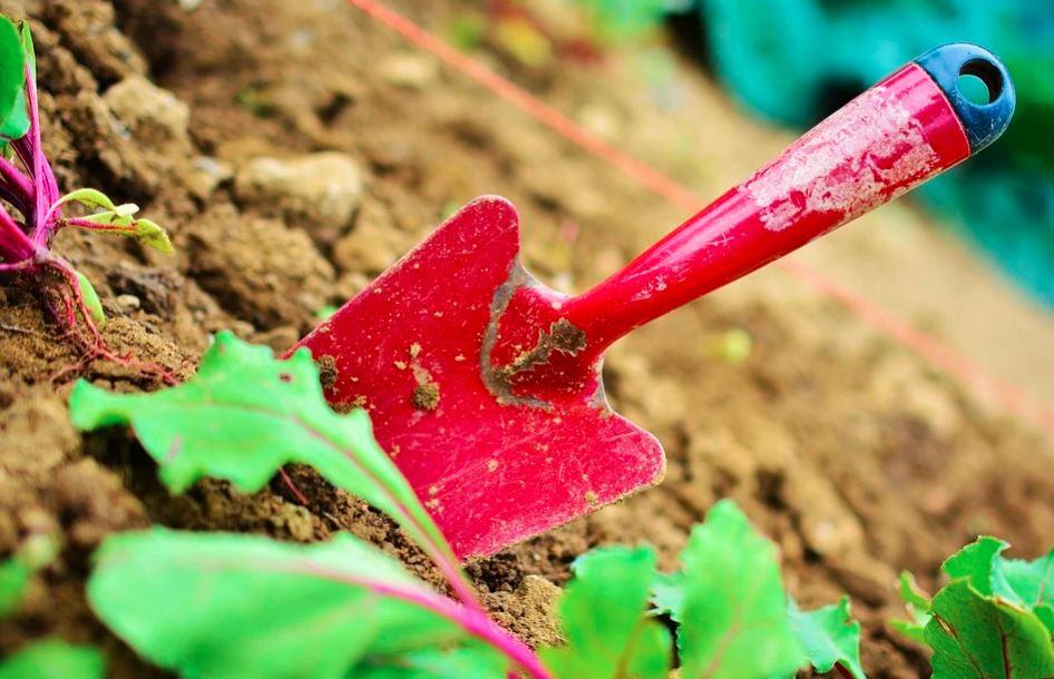 rośliny chronione