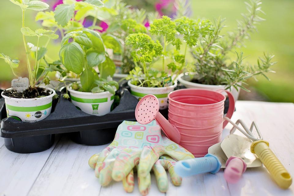 Uprawa ziół w domu – jakie zioła hodować na parapecie?