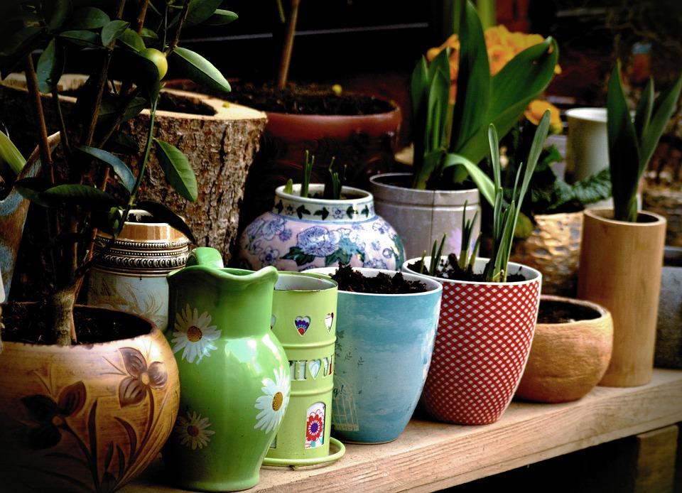 Doświetlanie roślin doniczkowych - jak dobrać odpowiedni sprzęt i światło?
