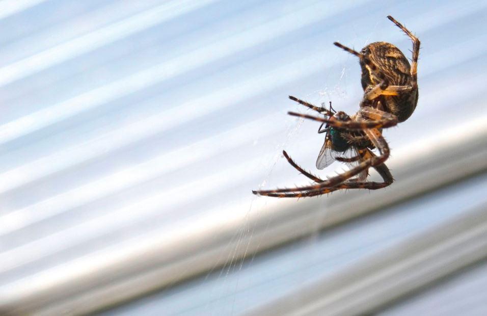 sposoby na pająki