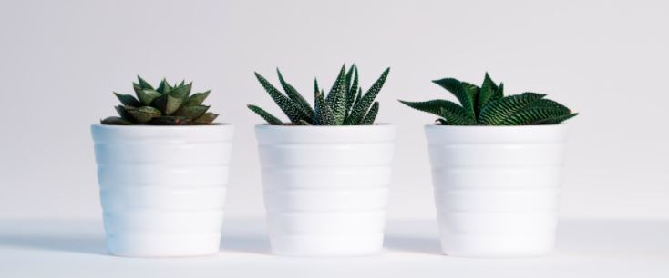 Rośliny doniczkowe zwalczają toksyny