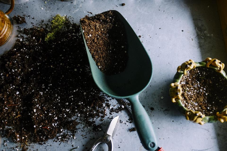 Gleba kwaśna czy zasadowa – jak rozpoznać?