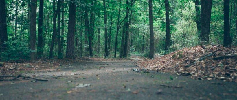 Osiedle w lesie doniesienia